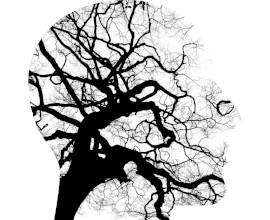 hersenen2 vierkant